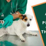 Animals Care Providers Getting their Paws on CRM